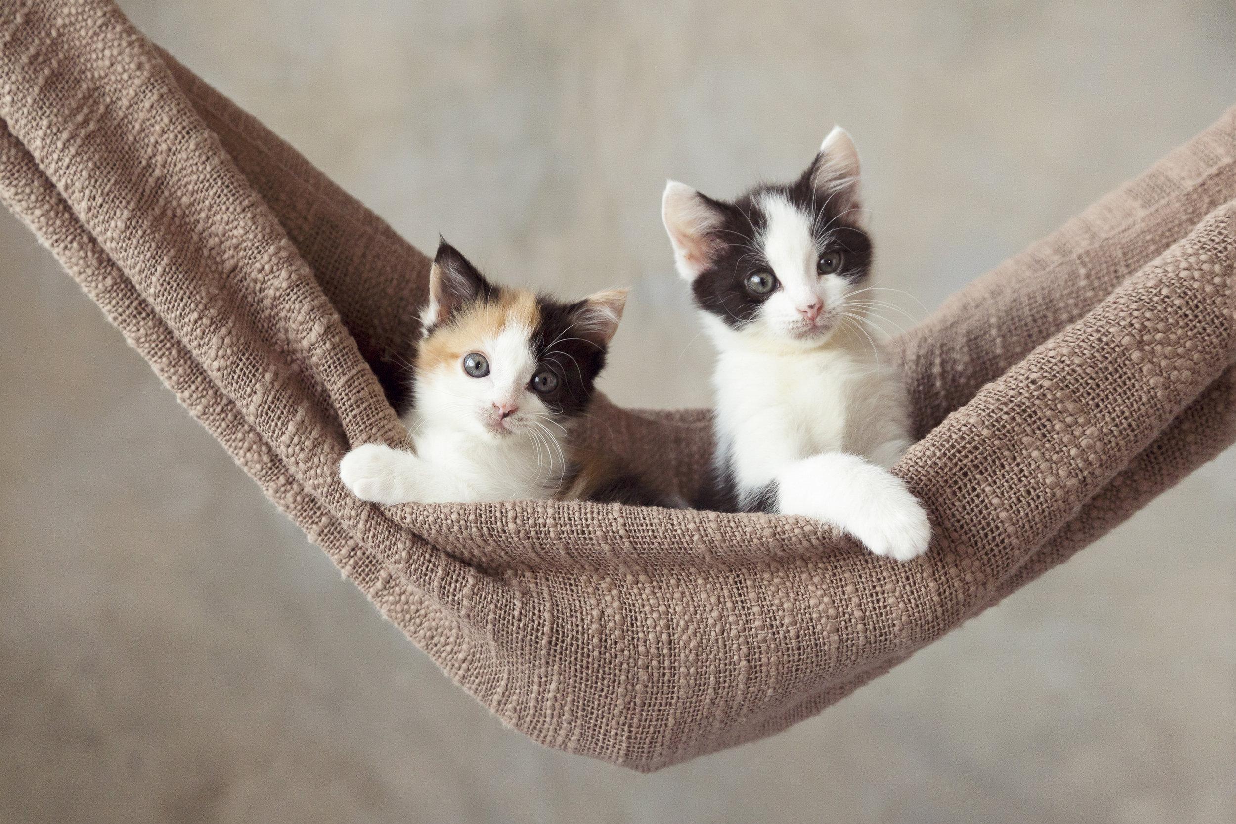 Cat Portrait 01.jpg