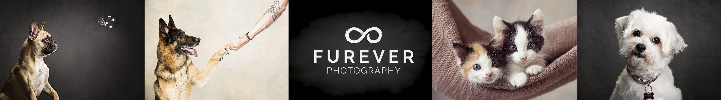 Furever Photography Pet Photographers