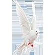 White Dove small flip.png