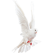 White Dove small flip.png