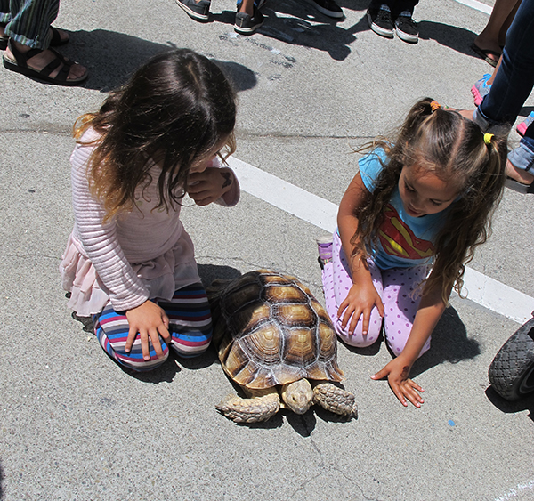 Vivarium Tortoise