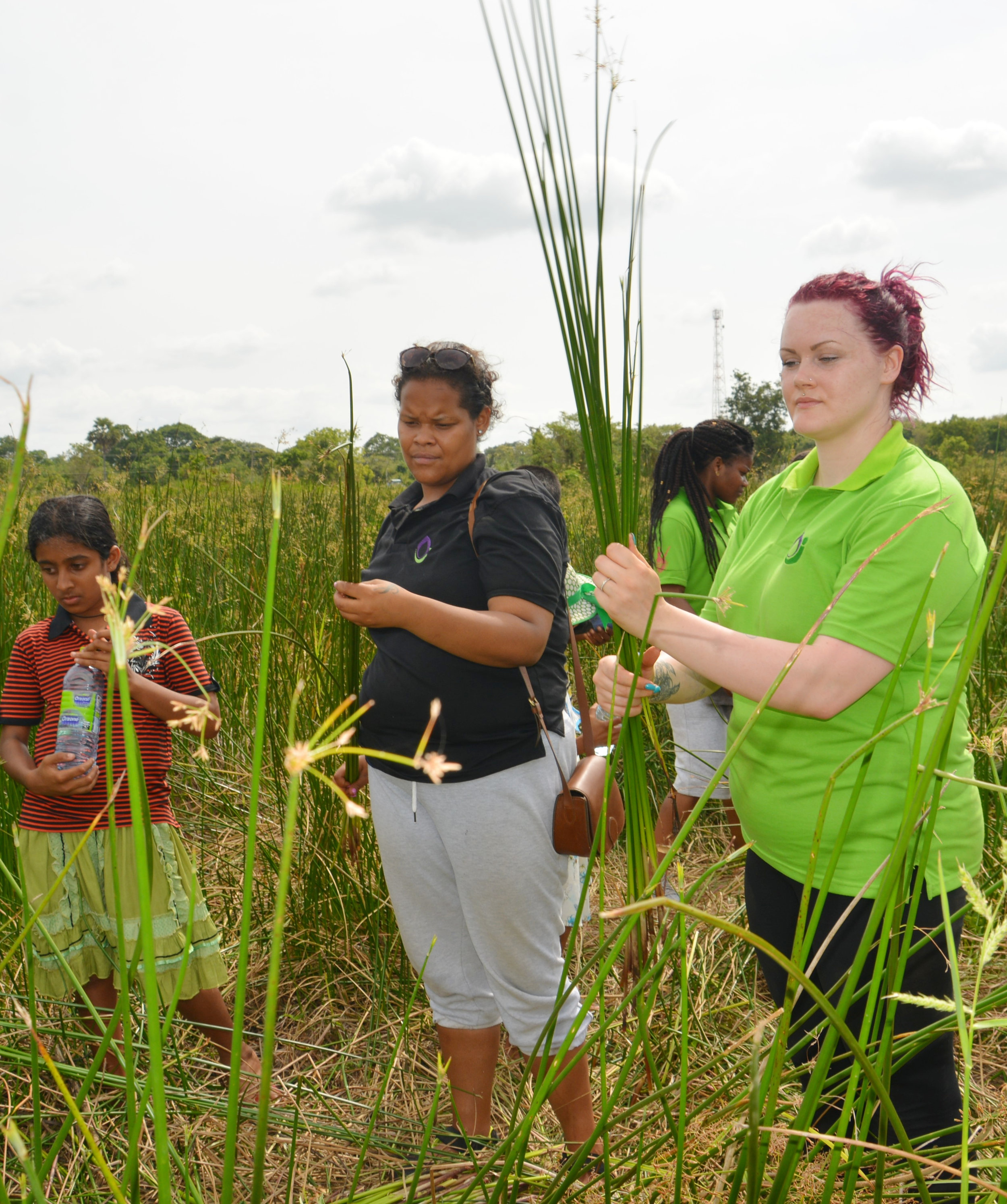 Selecting Reeds for Basket Weaving
