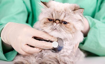 Health check cat.jpg