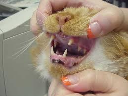 teeth 8.png