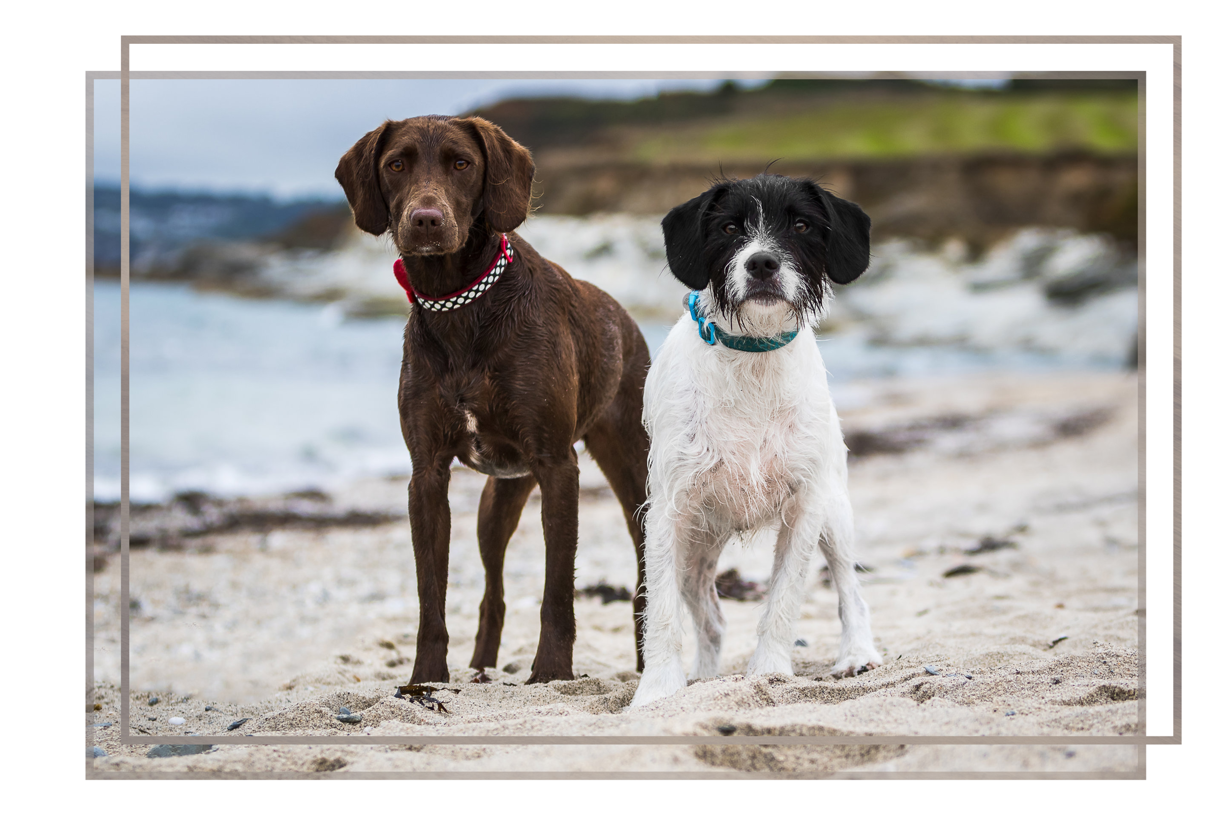 pet sessions - Is your pet an equal member of the family? Why not look at my pet sessions where I capture stunning photos of your best friends and your family together.