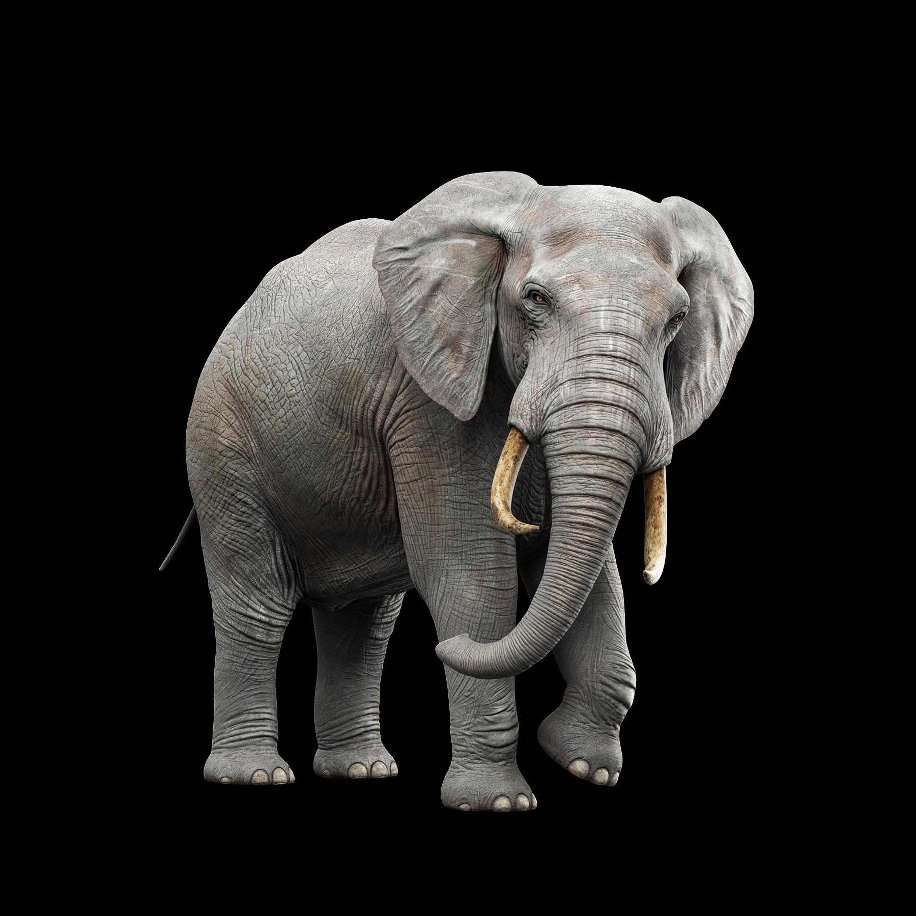 Elephant_V005_NO_FUR.jpg
