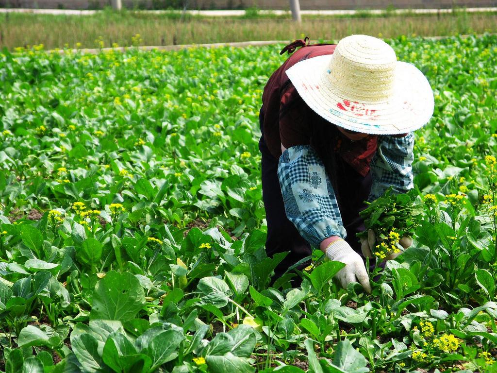 Farming in China- Varhsa Rao talking about China