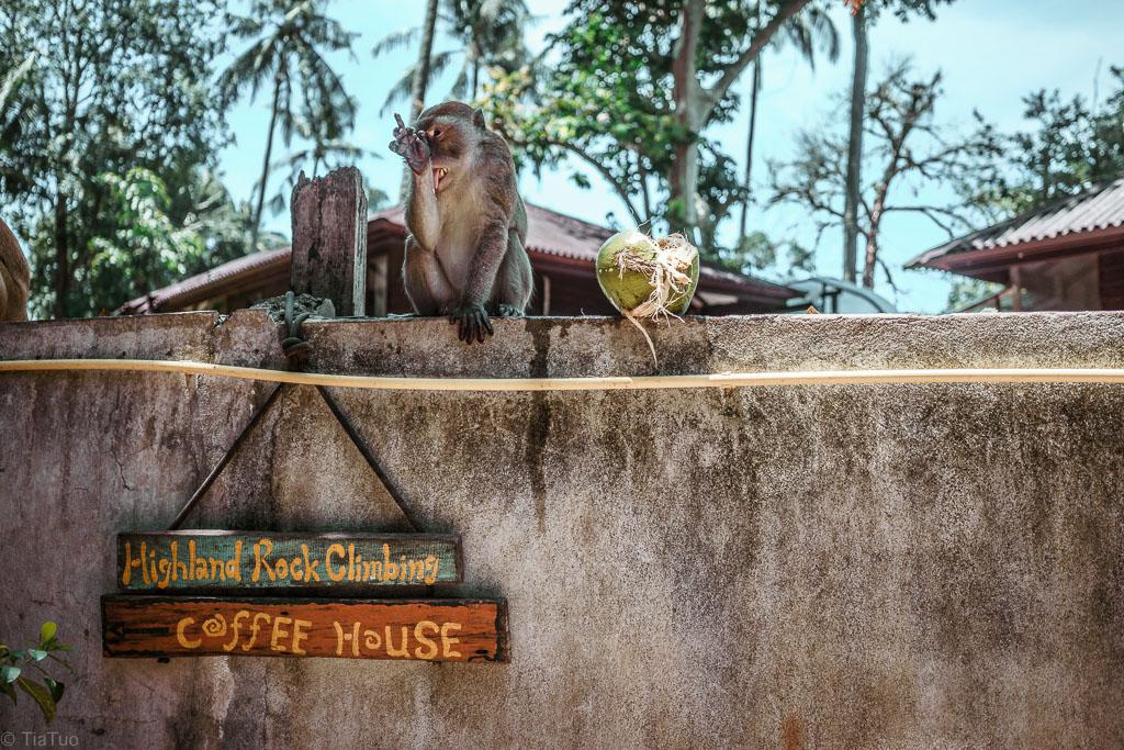 Monkeys are aplenty at Railay