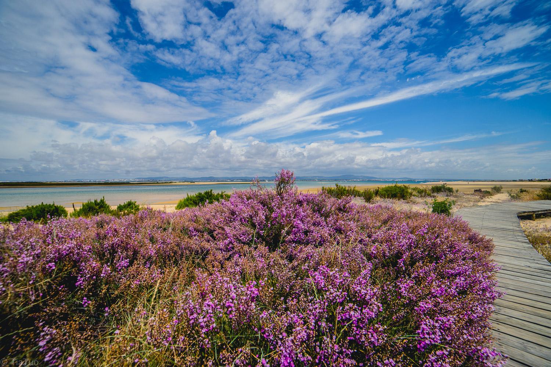 purple.flowers.jpg