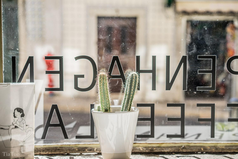 copenhagen.coffeelab.cactus.jpg