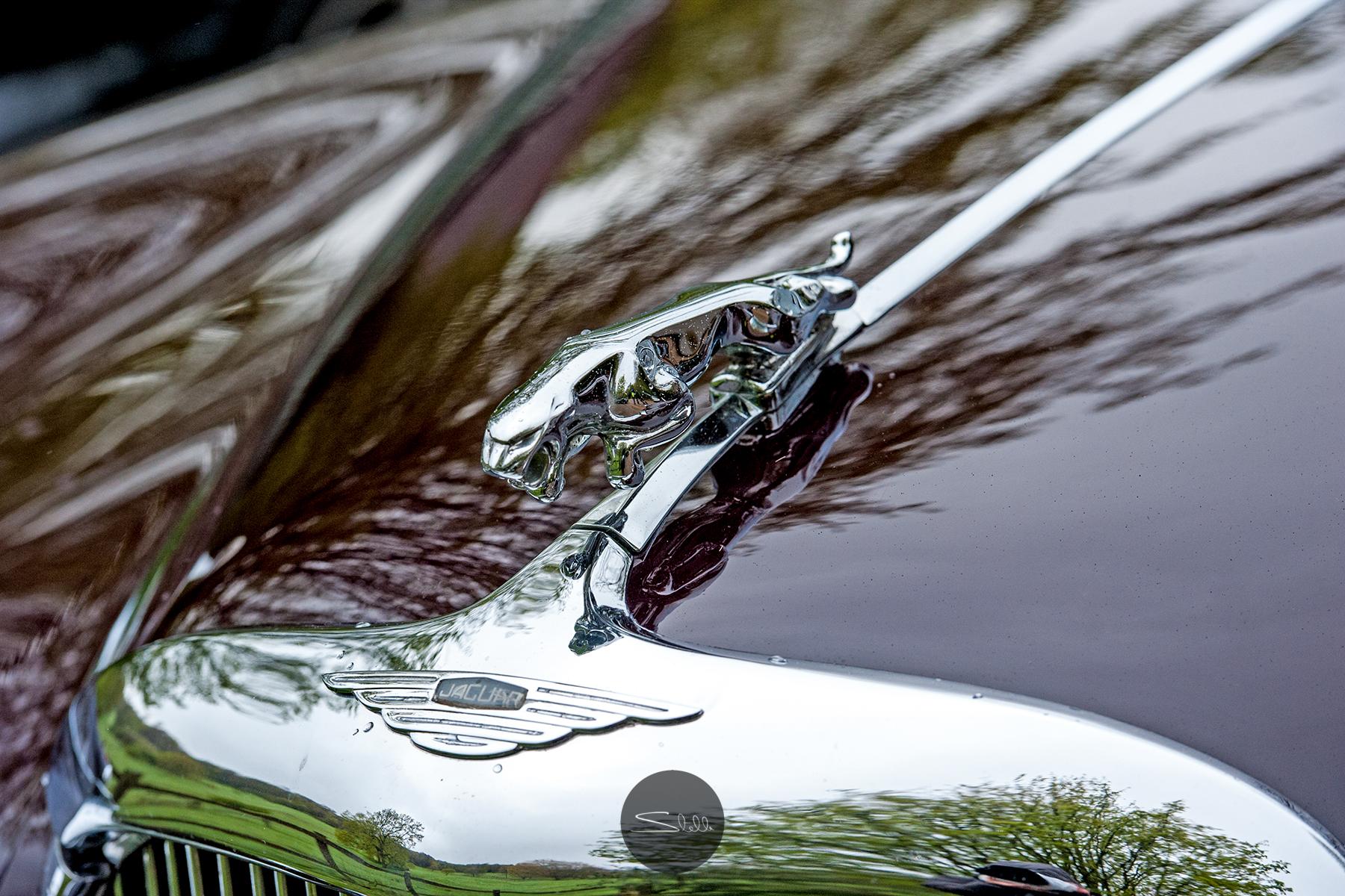 Stella Scordellis Jaguar Car Run 2015 20 Watermarked.jpg