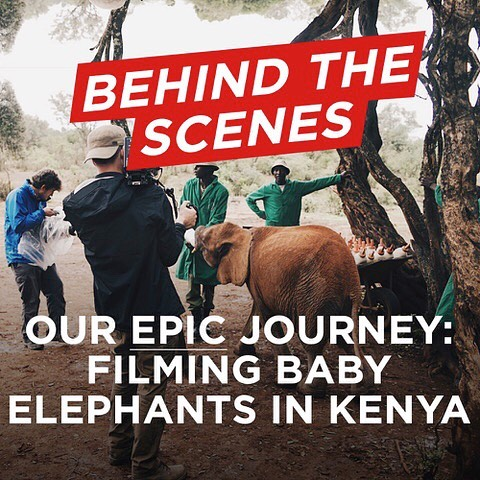 Looking for something fun to read on the commute home? Take a look at our latest blog post! . . . .  #filmmaking #videoproduction #kenya #travel #documentary #ursa #elephants #photography #wildlifephotography #dop #videoediting #blog