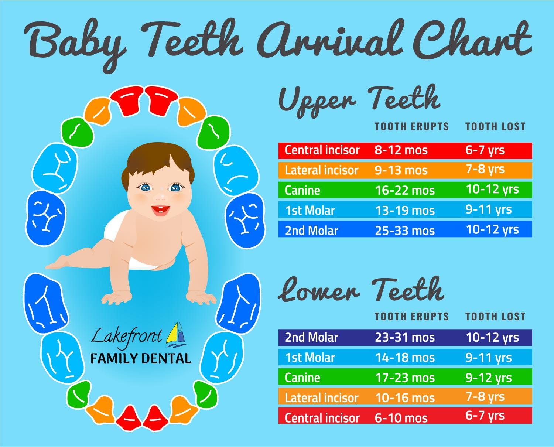 baby-teeth-chart.jpg