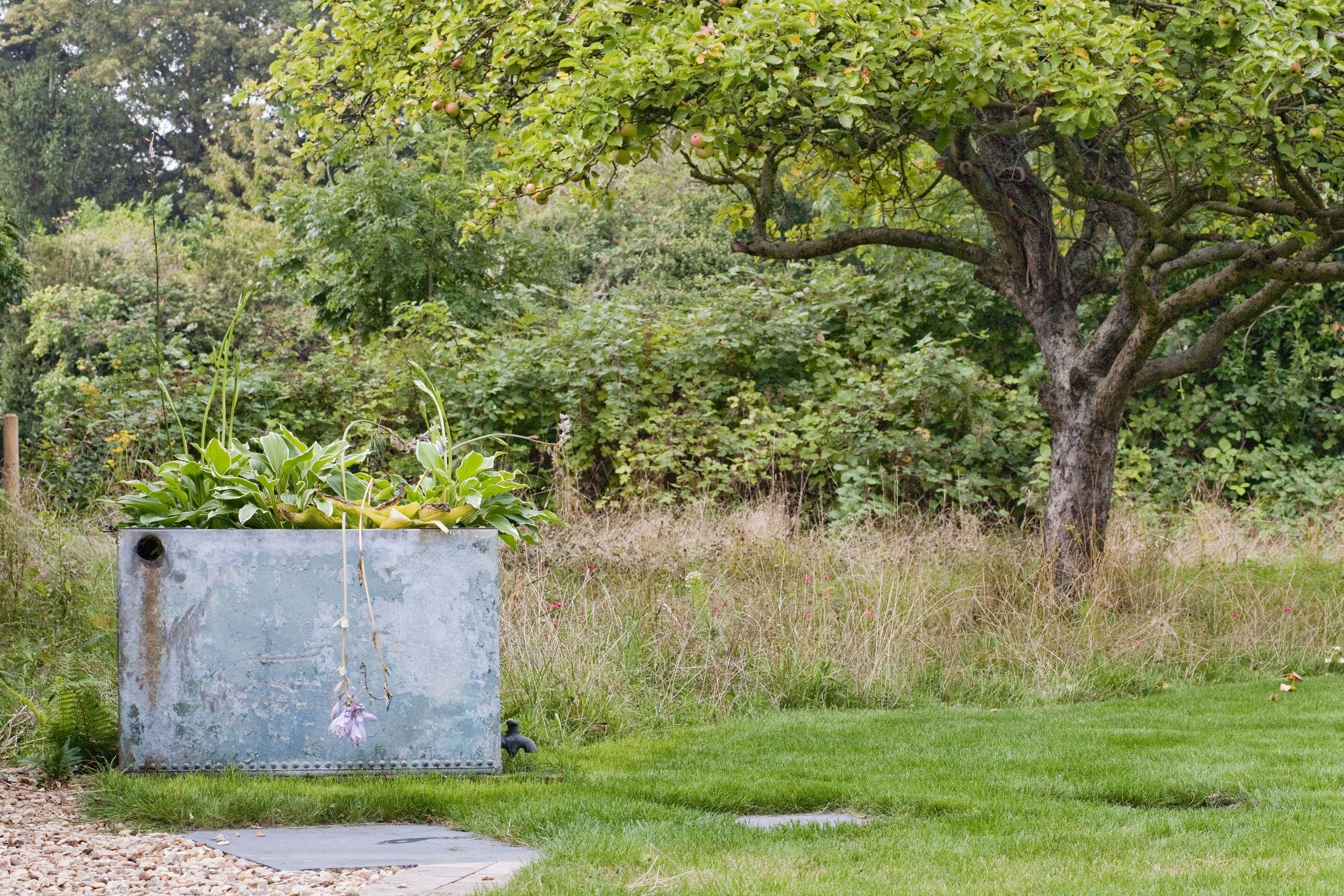Wild garden By Lesley-Anne Churchil.jpg