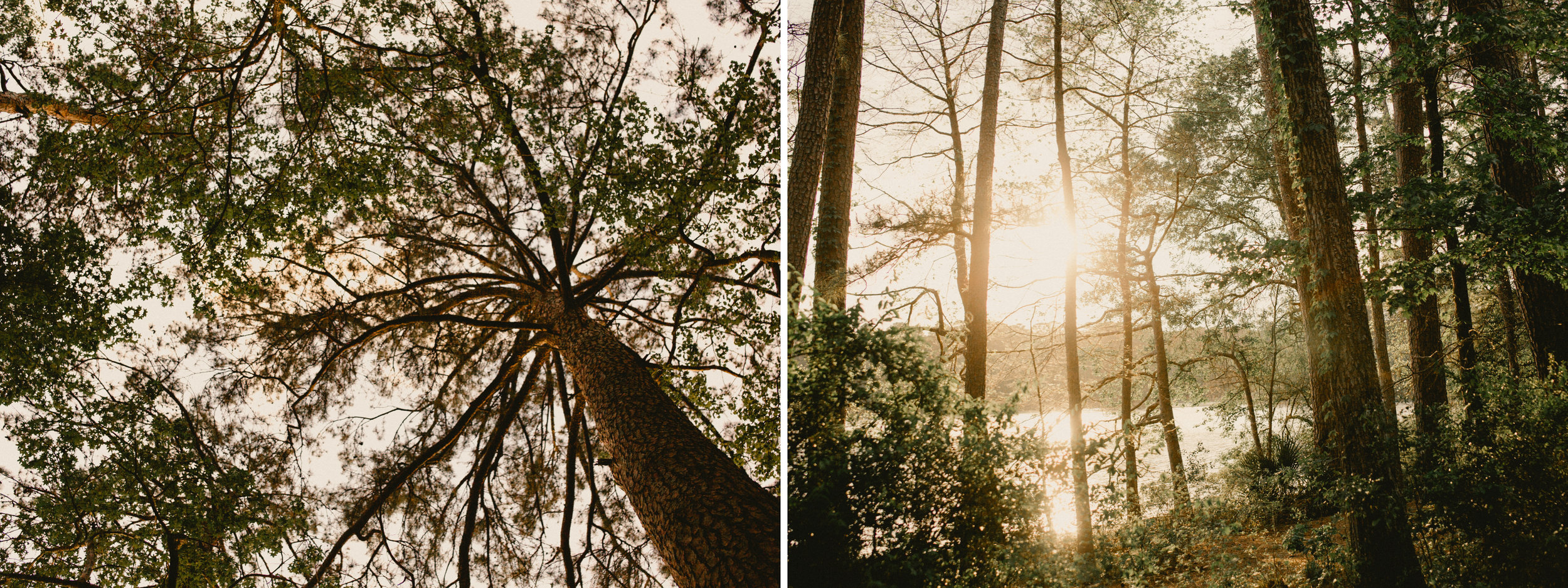 forest sunset.jpg