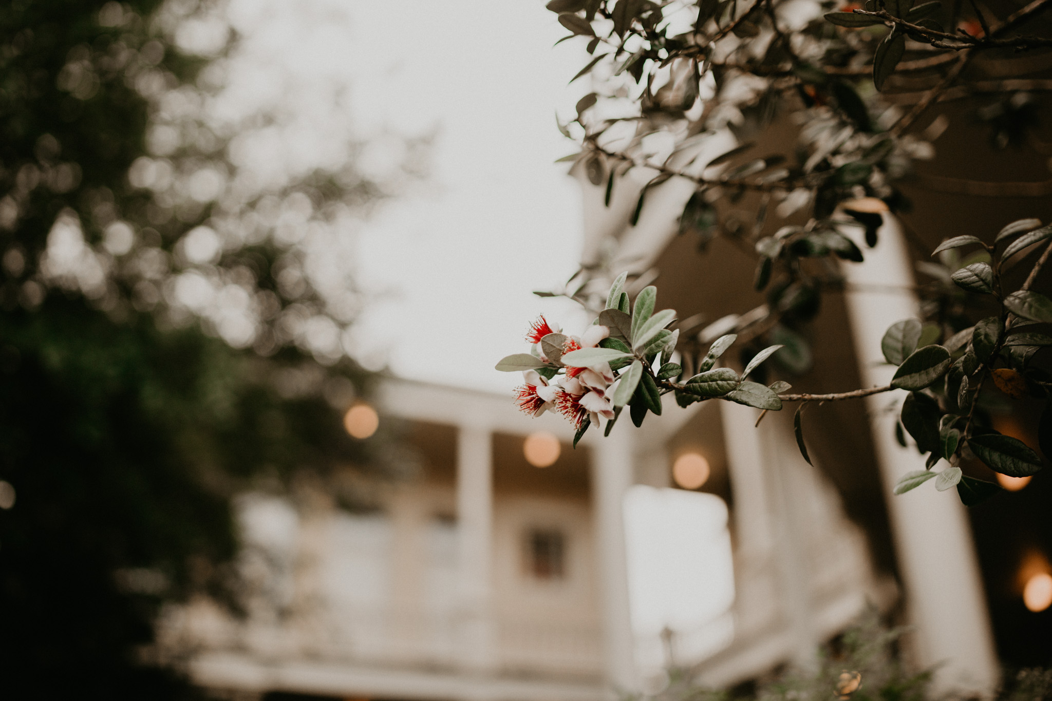 Friedrich -- Historic Home Wedding-111.jpg