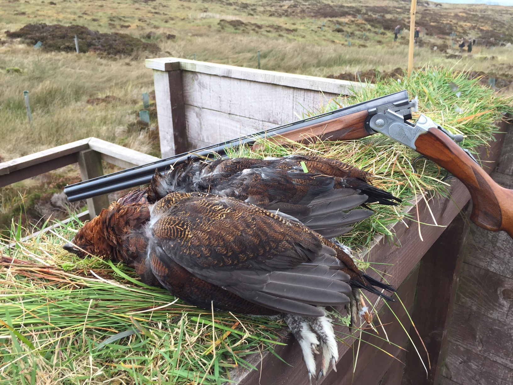 We don't just sell the birds, sometimes we get to shoot them as well and we were lucky enough to give Grouse a go in Cumbria - the first time out on the Moor and what a splendid day it was too!