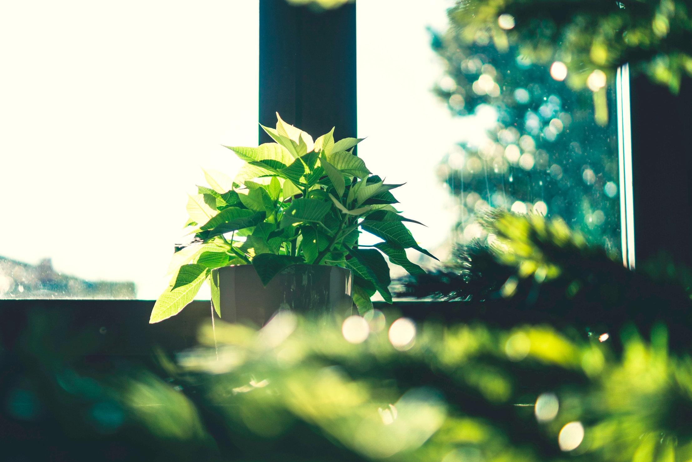 blur-bokeh-bright-720555_2.jpg