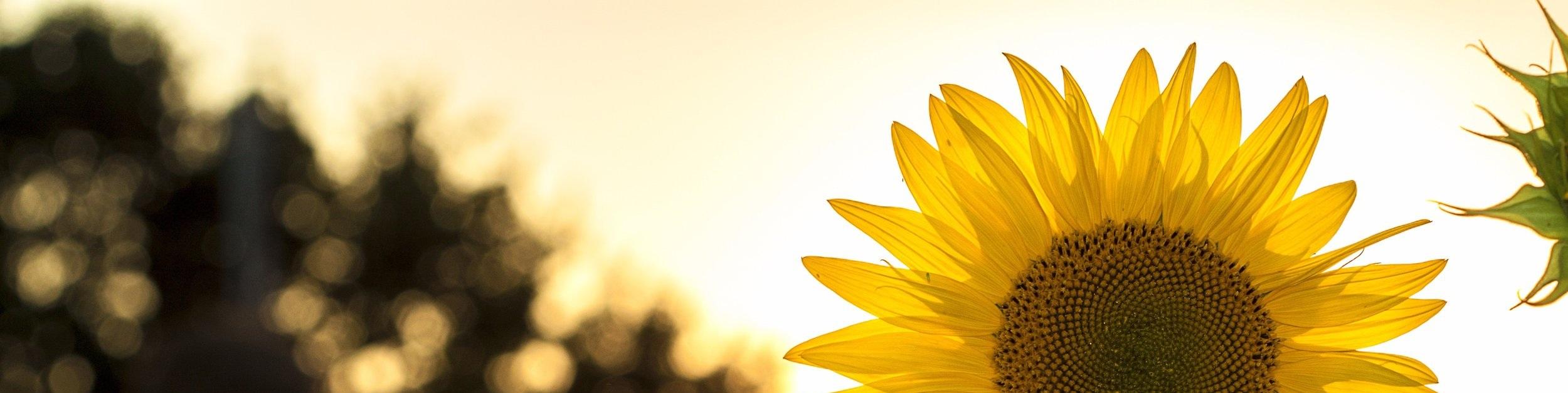 environment-flower-hd-wallpaper-33044.jpg