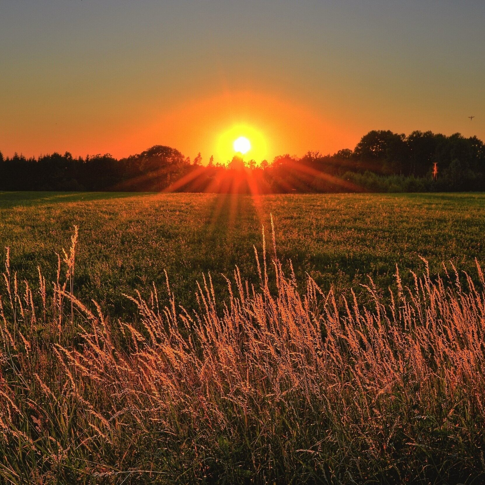 beautiful-cropland-dawn-1237119.jpg