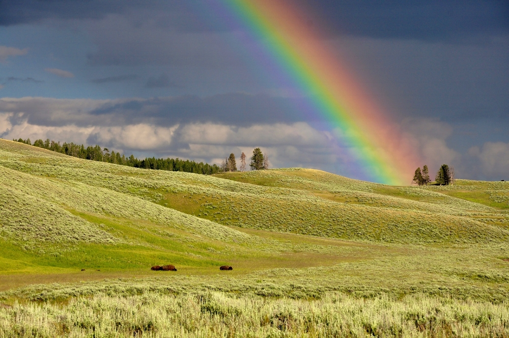 Some may think I scheduled this post for the middle of March to connect it to  St. Patrick's Day, which is a day to look for the pot of gold at the end of the rainbow and a sign of good luck. I did not. It's a fun example how we can laugh with God and recognize he puts even the smallest of details in place. Photo by  Pexels