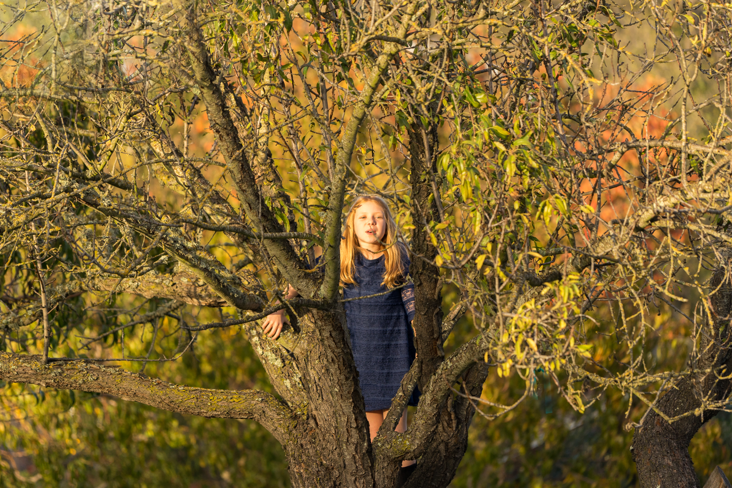 10 year old girl in tree-San Ramon family photographer