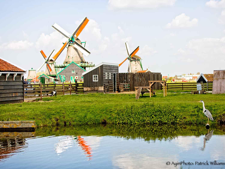 Windmill Farm-.jpg