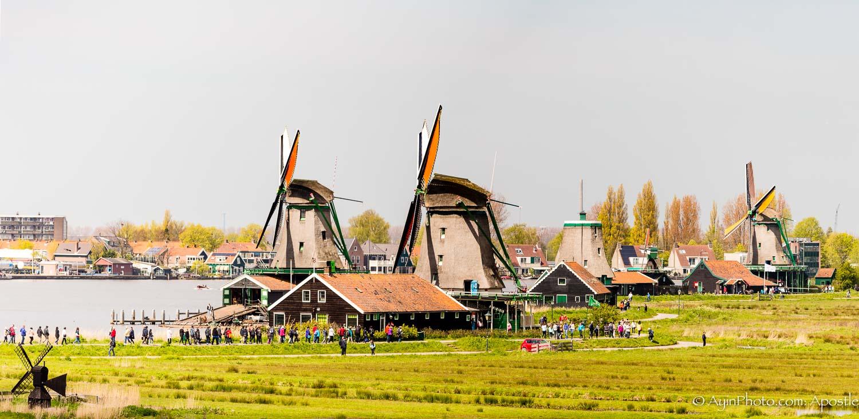 Windmill Farm 74A3355-.jpg
