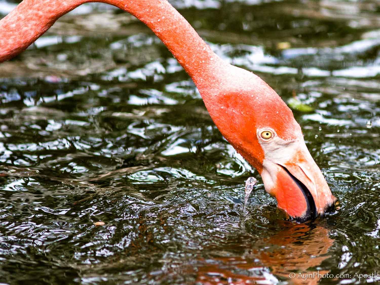 Florida FG Flamingo-9846.jpg