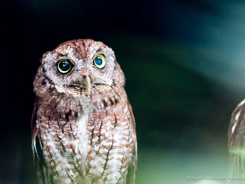 Florida FG Owl-9828.jpg