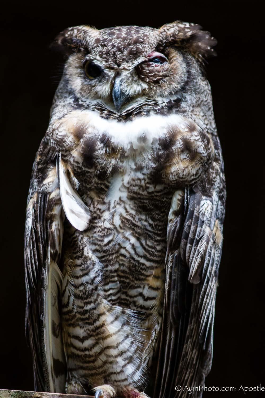 Florida FG Owl-9819.jpg