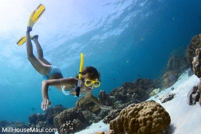 ocean snorkleing