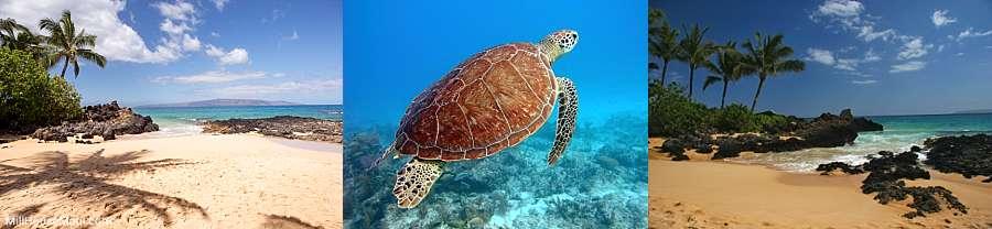 Snorkeling Makena