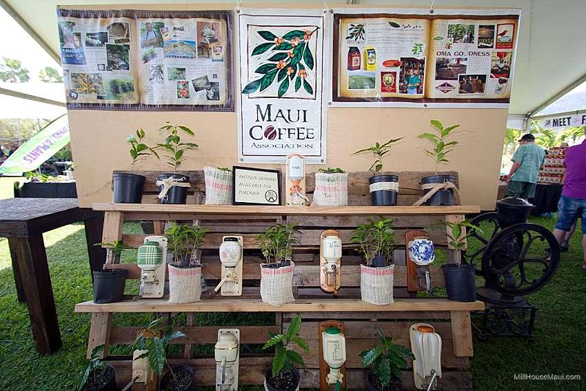 Maui Coffee