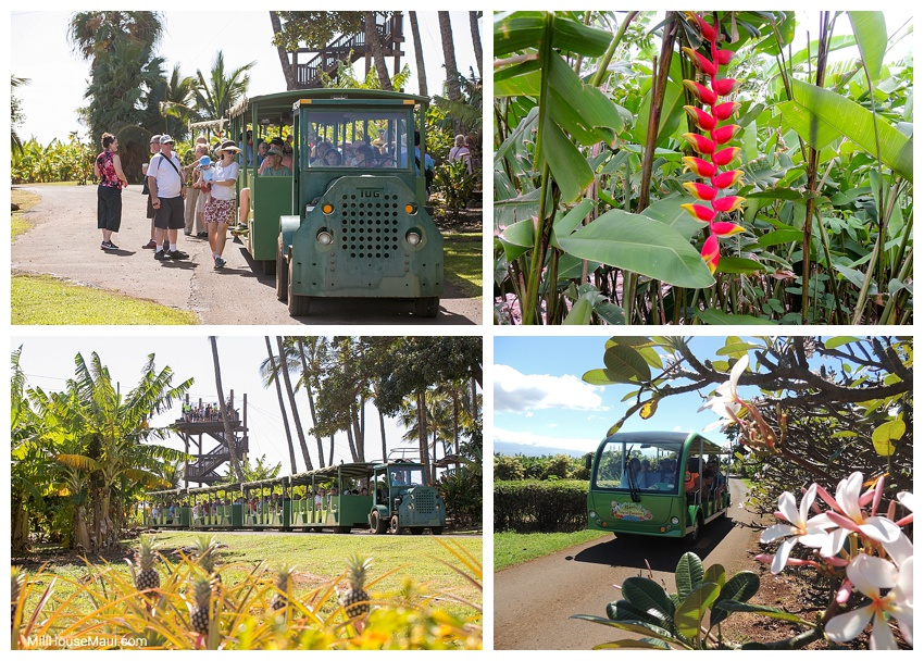 maui tropical plantation tram