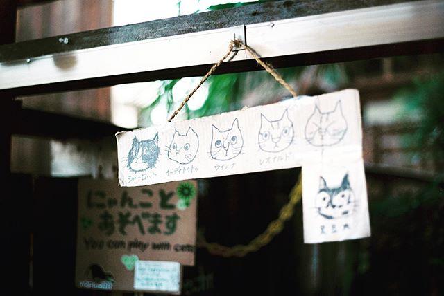 ねこ 🦁🐱 #japan #analogue #cats