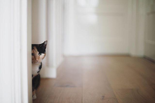 miauw 🐱