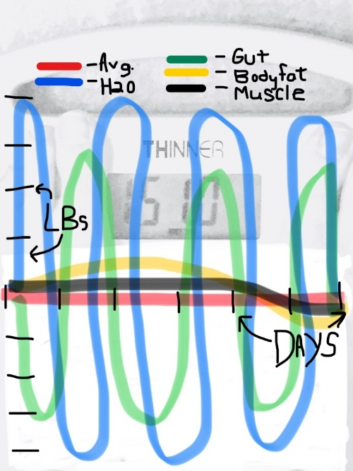 Weight fluctuation with info.jpg