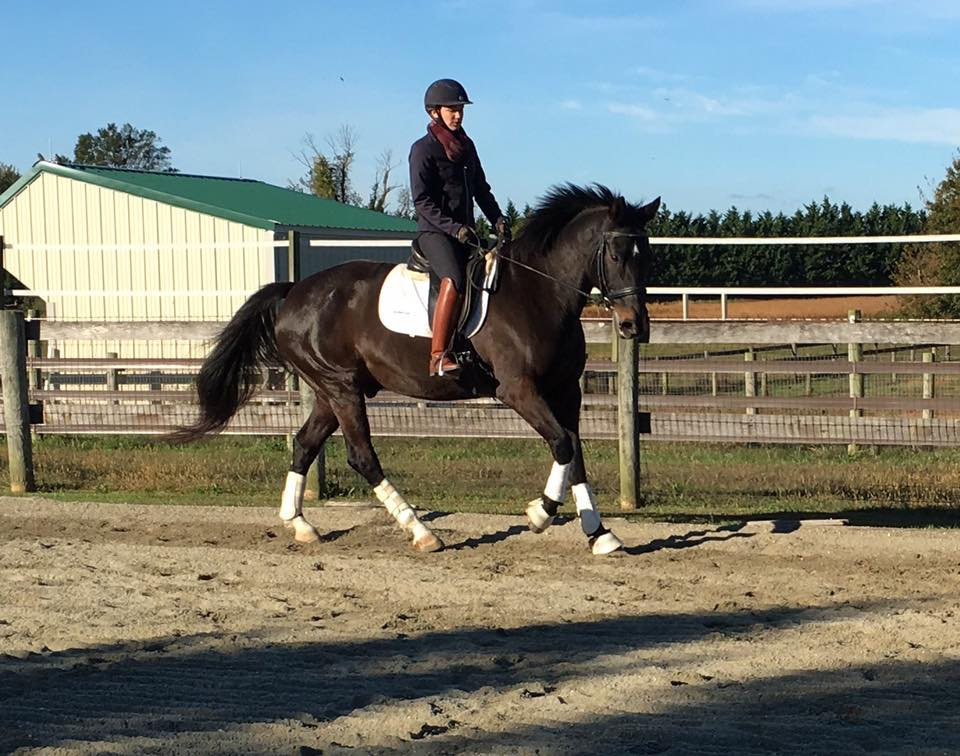 Testimonials - I have been riding my whole life and with various professionals and Sarah is truly great. Her way with horses, enjoyable personality and ability to convey her knowledge to both horse and rider is a true gift!- A happy client