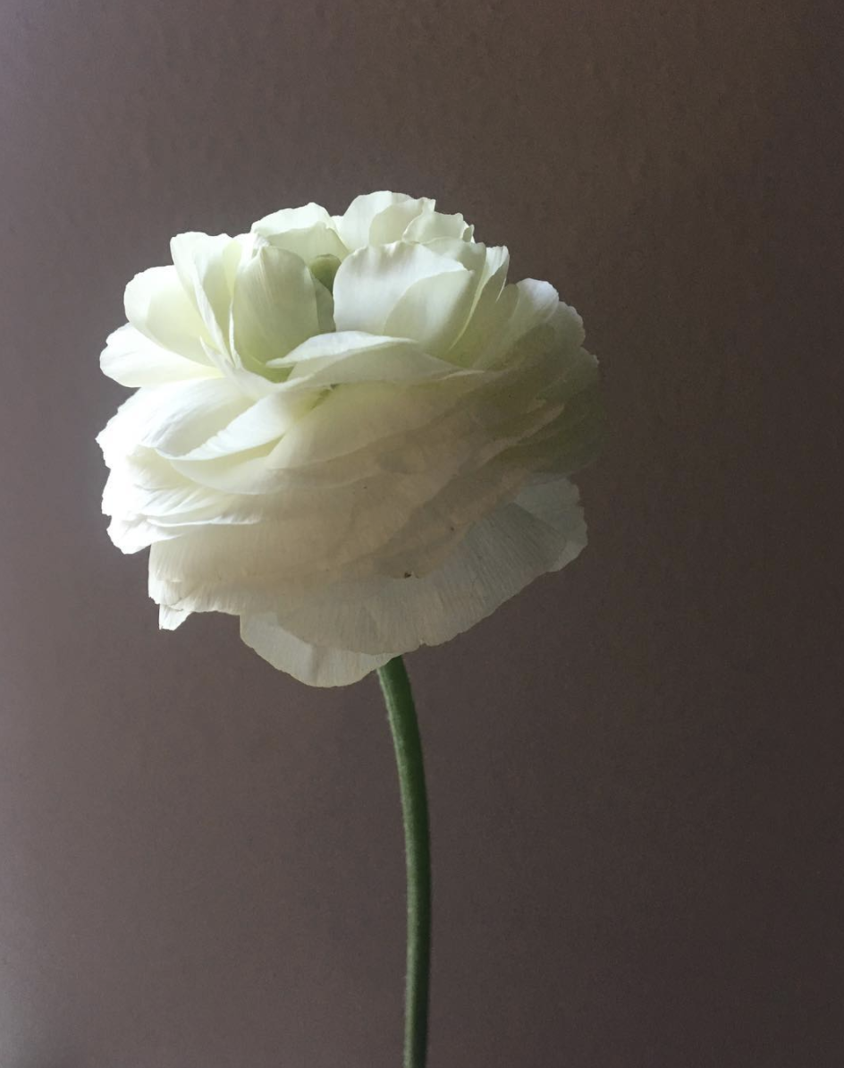 Olive Grove Design - Dallas Wedding Flowers - Ranunculus - 00008.png