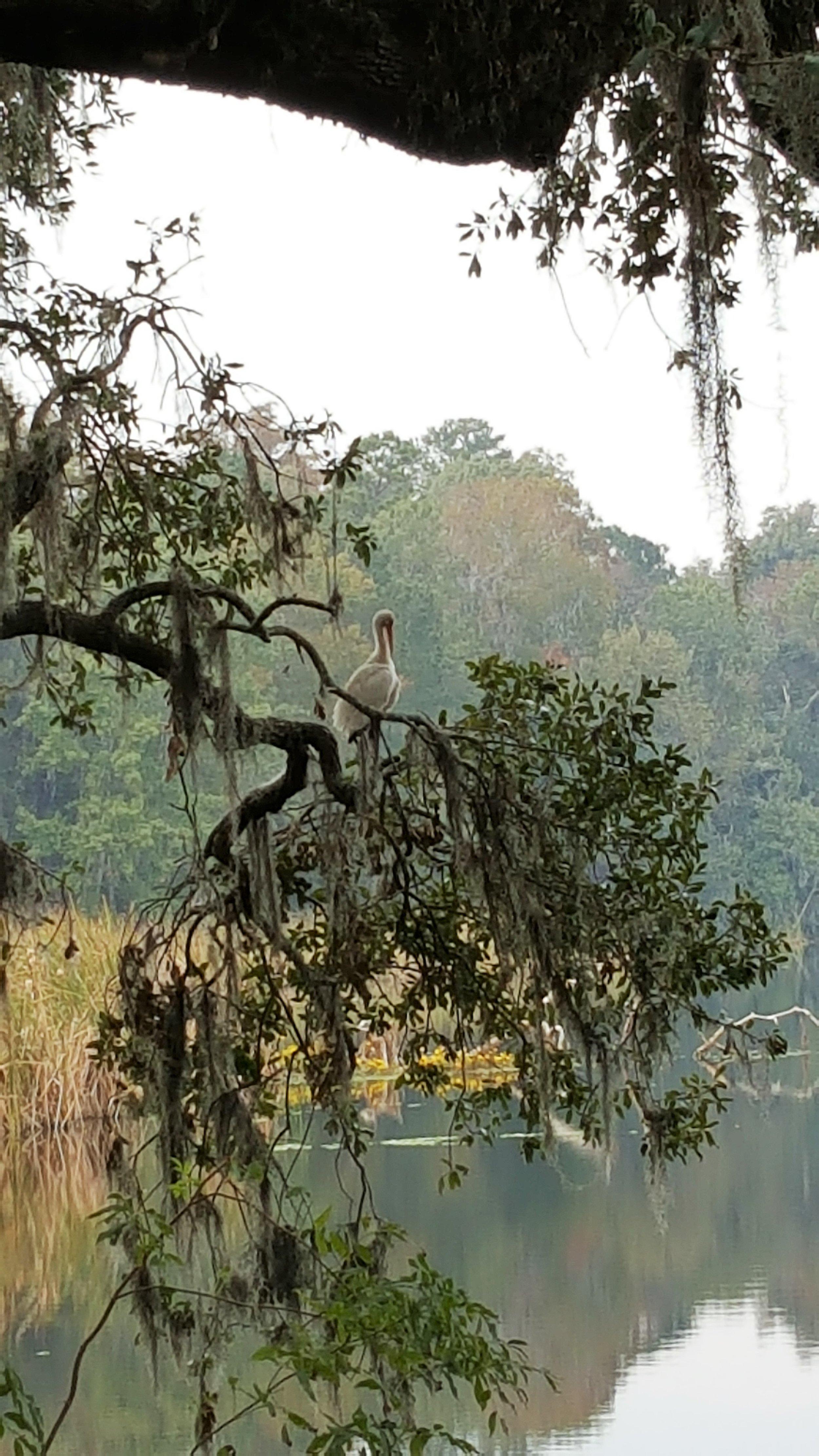 plantationmiddlebird.jpg