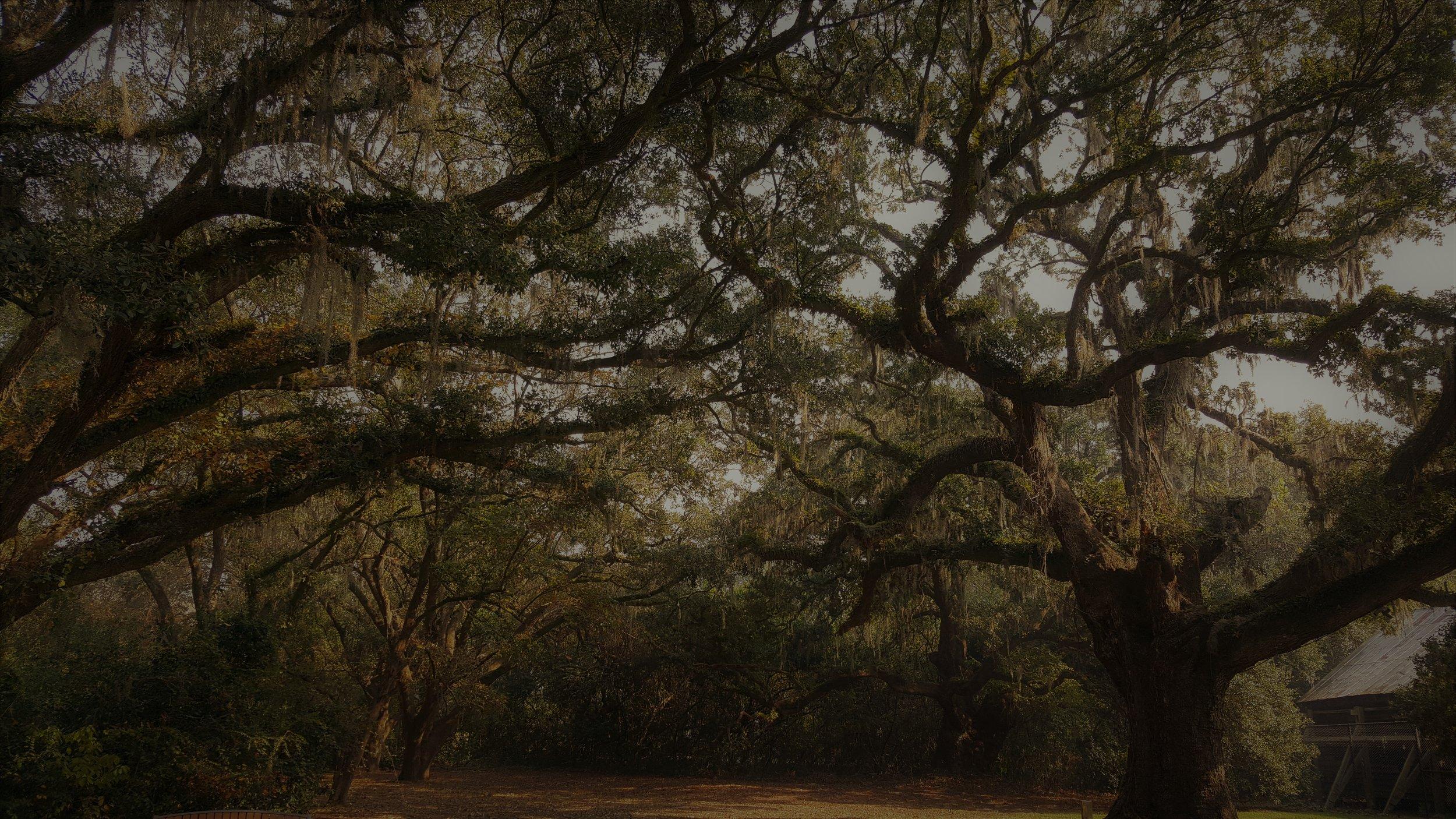 plantations.jpg