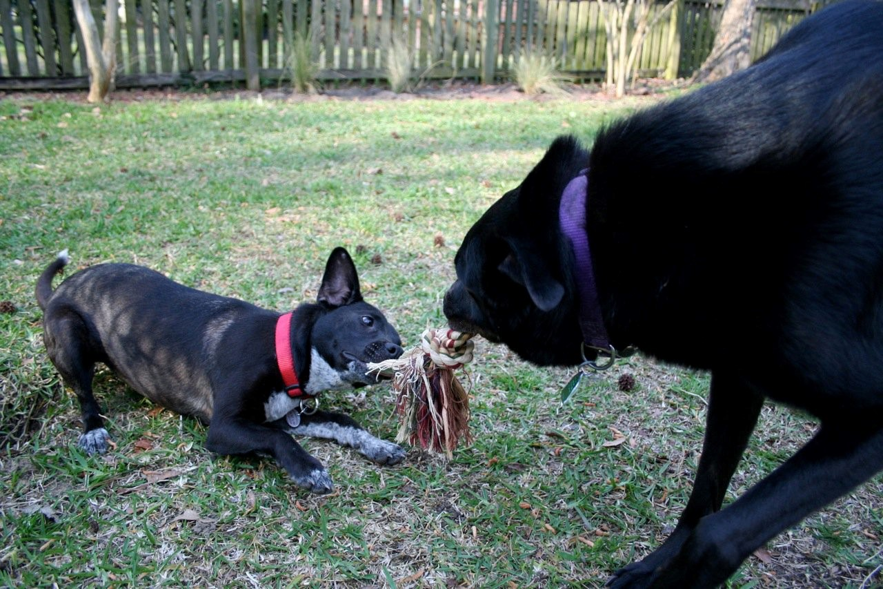 Tug of War with my big brother, Nick, in my new backyard.