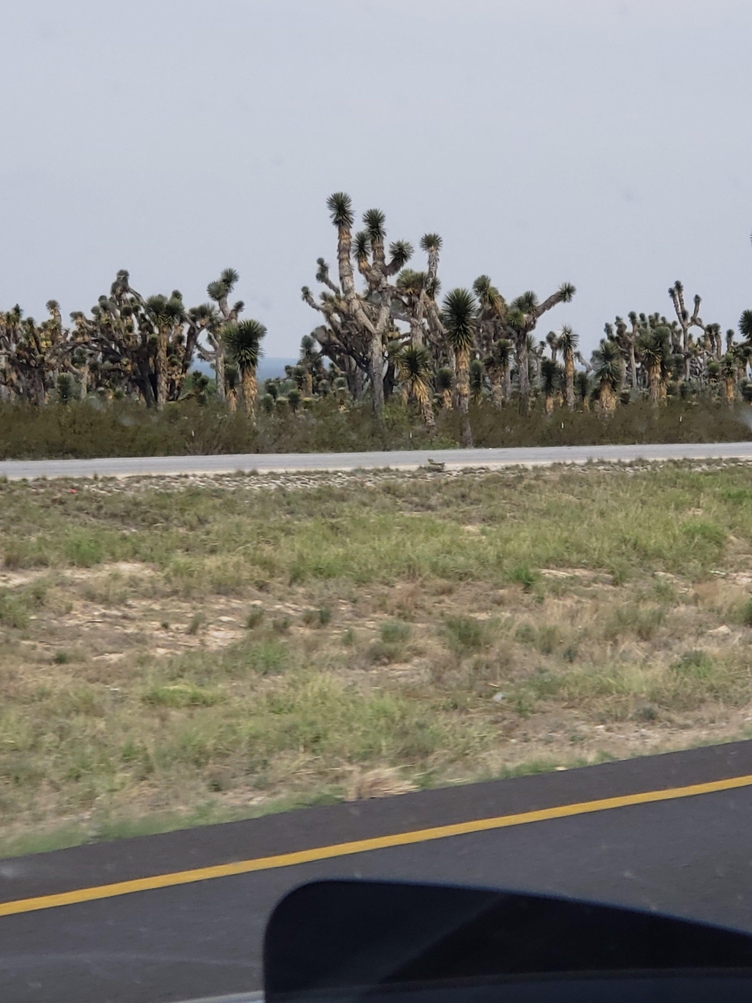 Lydia's favorite desert vegetation