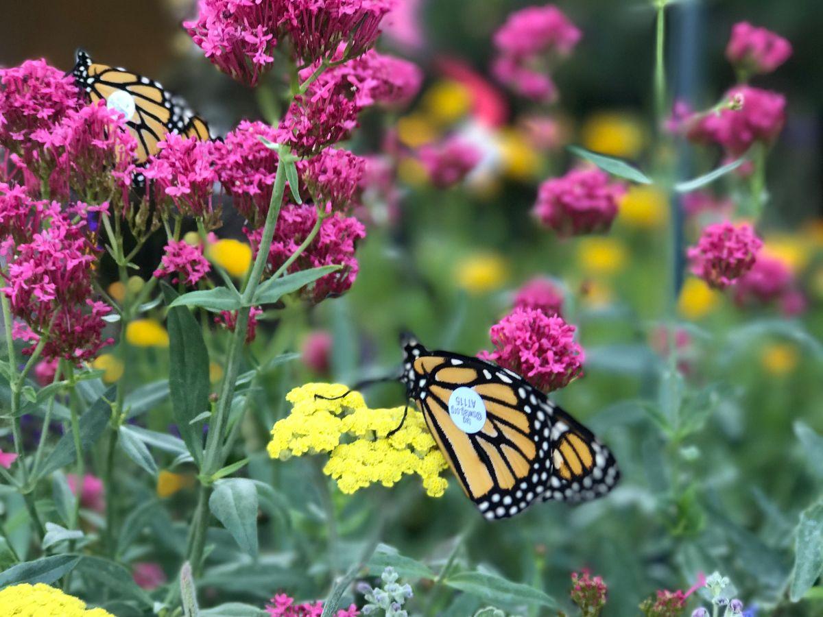 Plants and Pollinators.jpg