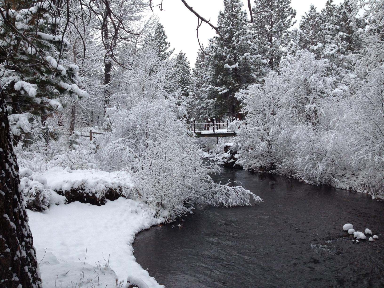Winter Morning at the Creek.jpeg