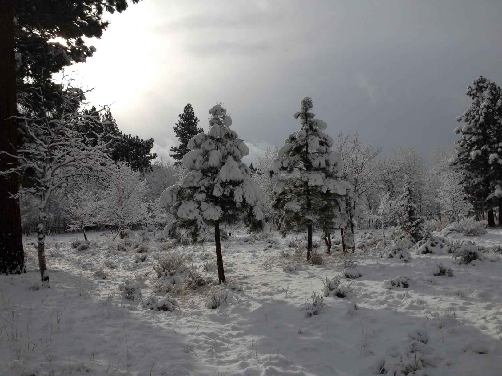 Winter Morning.jpeg