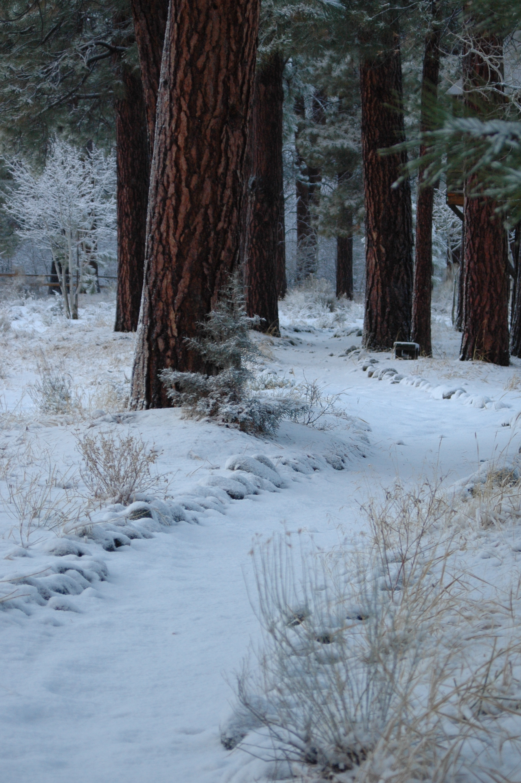 Path to Creek.jpeg