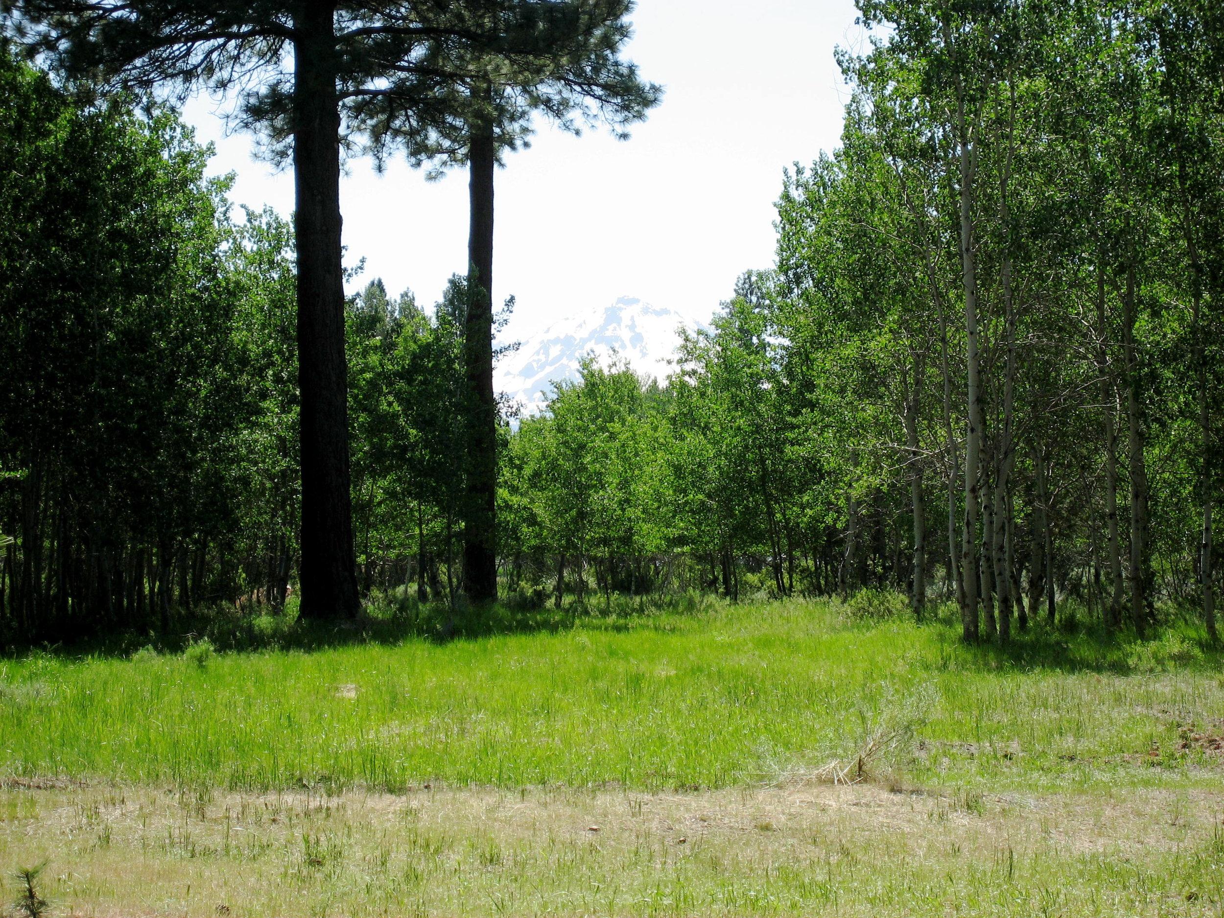 Aspen Grove (5).jpeg