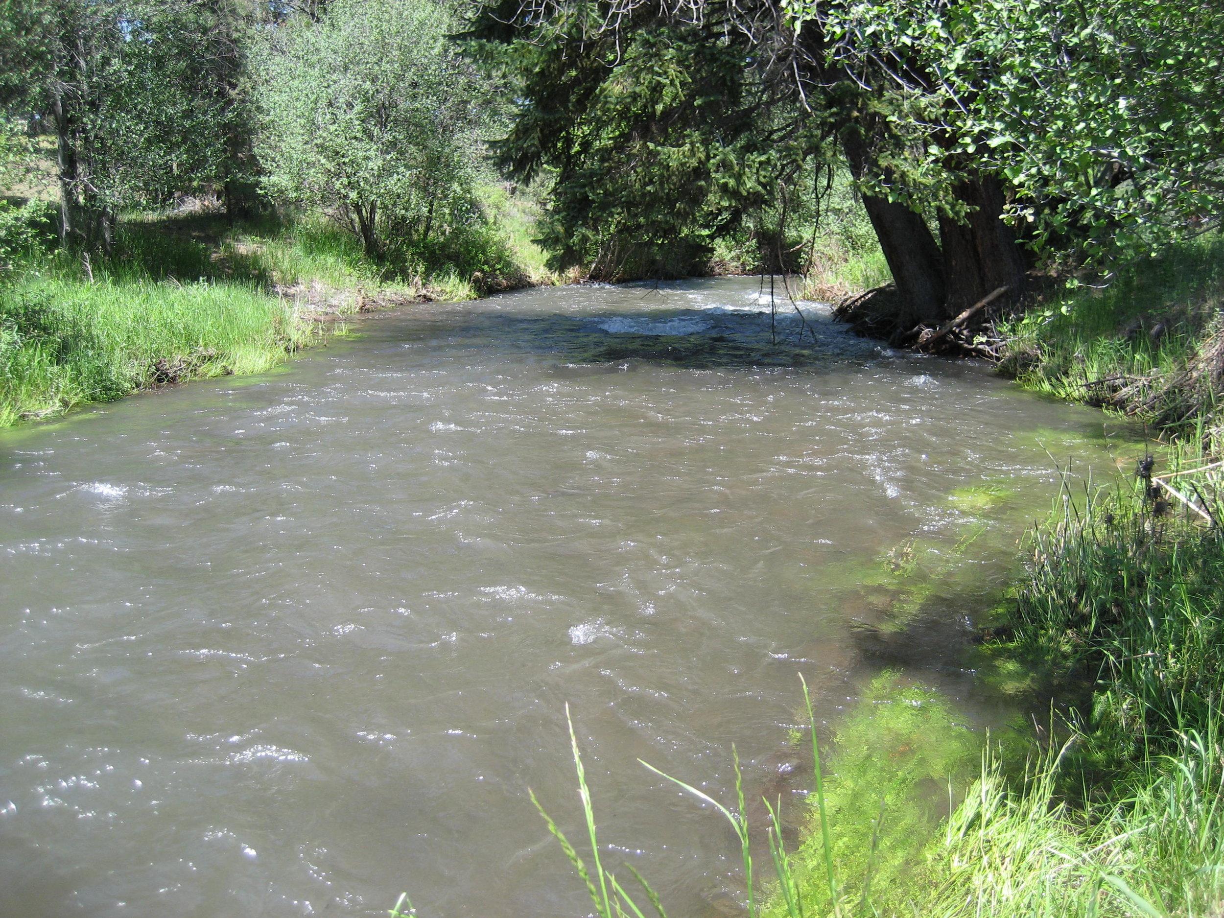 Whychus Creek.jpeg
